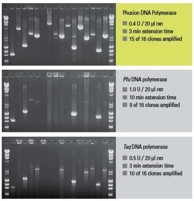 Phusion DNA Polymerase combines extreme fidelity with unparalleled speed and robustness