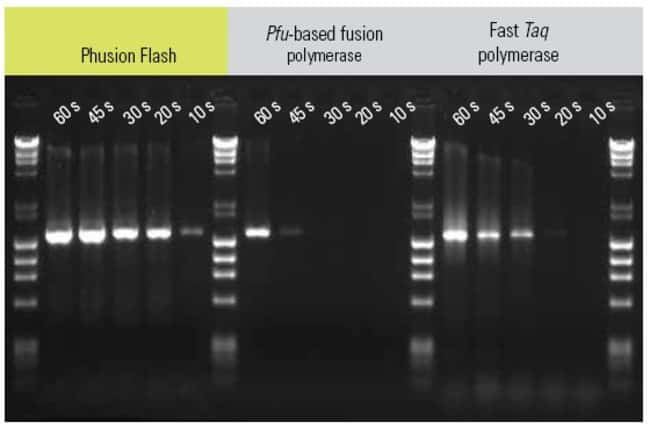 A 1.5 kb human cathepsin K gene was amplified with three different polymerases using varying extension times (10 to 60 s) with Thermo Scientific Piko® Thermal Cycler. Only Phusion Flash
