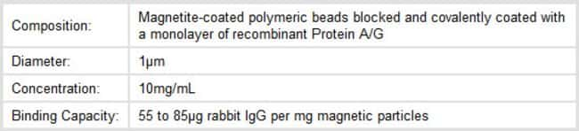 Properties of Thermo Scientific Pierce Protein A/G Magnetic Beads