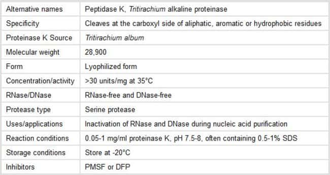 Properties of Proteinase K Enzyme