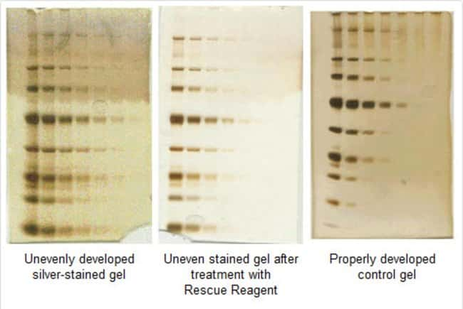 Dilutions of an unstained protein molecular weight marker were separated by SDS-PAGE using 4-12% gradient gels and stained with Thermo Scientific Pierce Silver Stain Kit (Part No. 24612). Rescue Reage