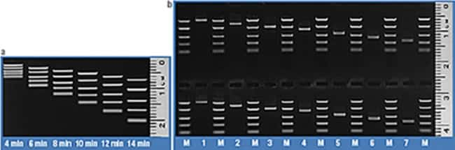 Time course of FastRule Middle Range DNA Ladder band separation