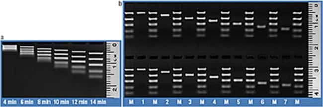 FastRuler Ultra Low Range DNA Ladder, ready-to-use