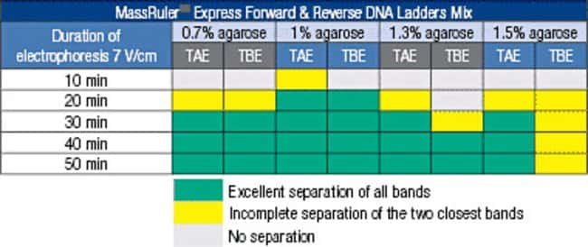 MassRuler Express DNA Ladder Mix Separation Guide for Various Electrophoresis Conditions