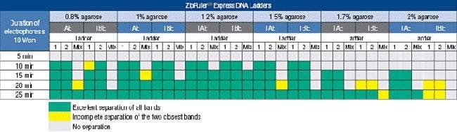 ZipRuler Express DNA Ladder separation guide for various electrophoresis conditions
