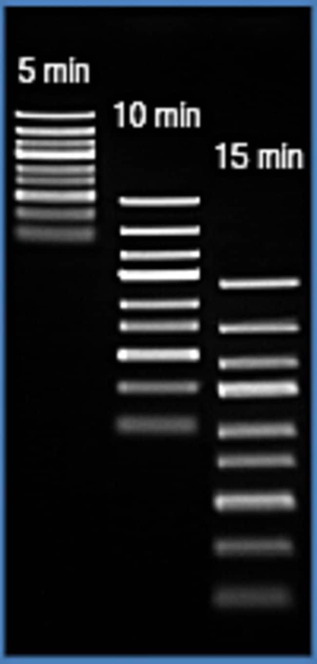 Fast separation of GeneRuler Express DNA Ladder at high voltage