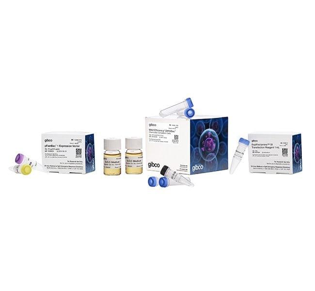 Bac-to-Bac™ Baculovirus Expression System