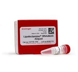 Lipofectamine™ RNAiMAX Transfection Reagent
