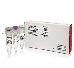 Platinum™ II Hot-Start PCR Master Mix (2X)