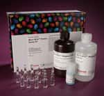 Micro BCA™ Protein Assay Kit