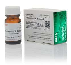 Proteinase K (Fungal)