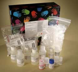 Pierce™ Co-Immunoprecipitation Kit