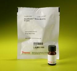 NeutrAvidin Protein