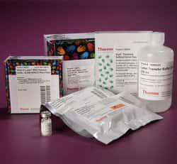 Sulfo-SBED Biotin Label Transfer Kit - Western Blot Application