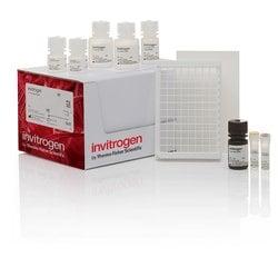 Glutathione Reductase Fluorescent Activity Kit