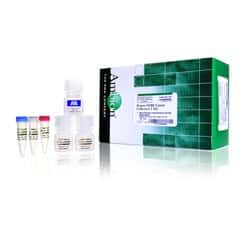 <i>Power</i> SYBR™ Green Cells-to-C<sub>T</sub>™ Kit
