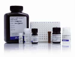 cAMP-Screen™ Cyclic AMP Immunoassay System