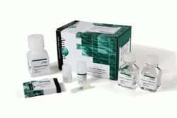 Stabilized Blood-to-C<sub>T</sub>&trade; Nucleic Acid Preparation Kit for qPCR, compatible with either PAXgene&trade; or Tempus&trade; Blood RNA Tubes