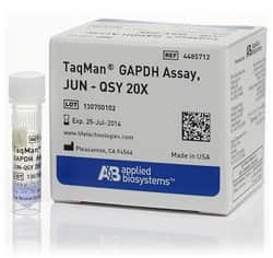 TaqMan™ GAPDH Assay, JUN™ dye/QSY™ probe