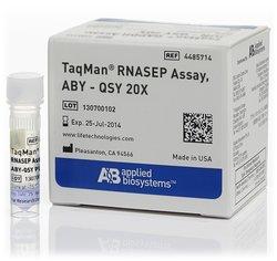 TaqMan™ RNase P Assay, ABY™ dye/QSY™ probe