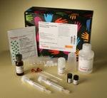 Pierce™ Protein A IgG Plus Orientation Kit, 2 mL