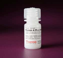 Pierce™ Protein A Plus UltraLink™ Resin