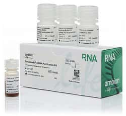 Dynabeads™ mRNA Purification Kit (for mRNA purification from total RNA preps)
