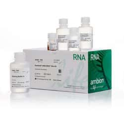 Dynabeads™ mRNA DIRECT™ Micro Purification Kit