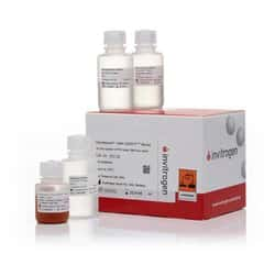 Dynabeads™ DNA DIRECT™ Blood Kit