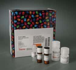 Pierce™ LDH Cytotoxicity Assay Kit