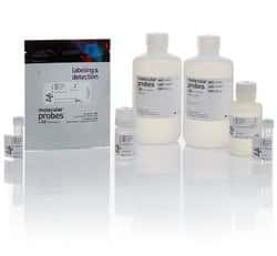 pHrodo™ Red Phagocytosis Particle Labeling Kit for Flow Cytometry