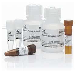 LanthaScreen® TR-FRET Progesterone Receptor Coactivator Assay Kit
