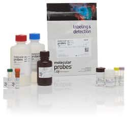 APO-BrdU™ TUNEL Assay Kit, with Alexa Fluor™ 488 Anti-BrdU