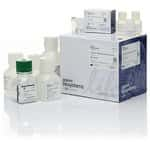 MagMAX™ DNA Multi-Sample Ultra Kit (with extra proteinase K and DNA binding beads)