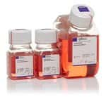 PSC Cardiomyocyte Differentiation Kit