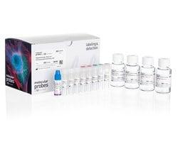 Human Dopaminergic Neuron Immunocytochemistry Kit