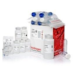 PureLinkExpi Endotoxin-Free