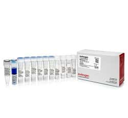 MEGAscript™ T7 Transcription Kit