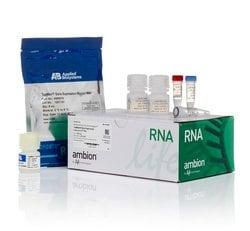 TaqMan&trade; Gene Expression Cells-to-C<sub>T</sub>&trade; Kit