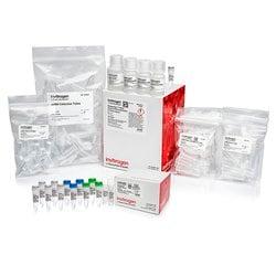 MessageAmp™ II-Biotin <i>Enhanced</i> aRNA Amplification Kit