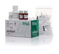 RiboPure™ RNA Purification Kit