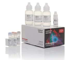 Biotin XX Tyramide SuperBoost™ Kit, Goat anti-Mouse IgG