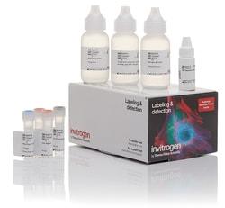 Alexa Fluor™ 555 Tyramide SuperBoost™ Kit, goat anti-mouse IgG