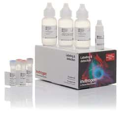 Alexa Fluor™ 647 Tyramide SuperBoost™ Kit, goat anti-mouse IgG