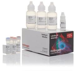 Alexa Fluor™ 555 Tyramide SuperBoost™ Kit, streptavidin