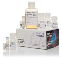 Click-iT™ EdU Alexa Fluor™ 488 Flow Cytometry Assay Kit