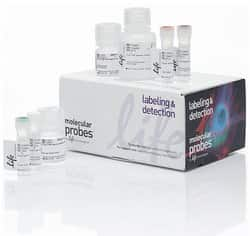 Click-iT™ Plus OPP Alexa Fluor™ 647 Protein Synthesis Assay Kit