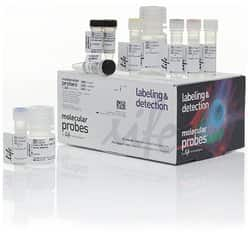 Click-iT™ Plus TUNEL Assay for In Situ Apoptosis Detection, Alexa Fluor™ 488 dye