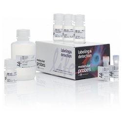 Click-iT™ Plus EdU Alexa Fluor™ 647 Flow Cytometry Assay Kit