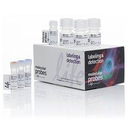 Click-iT® Plus EdU Alexa Fluor® 594 Imaging Kit